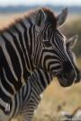 Namibia_22.jpg
