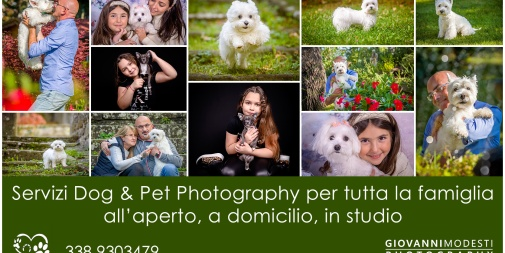 Dog & Pet Photography