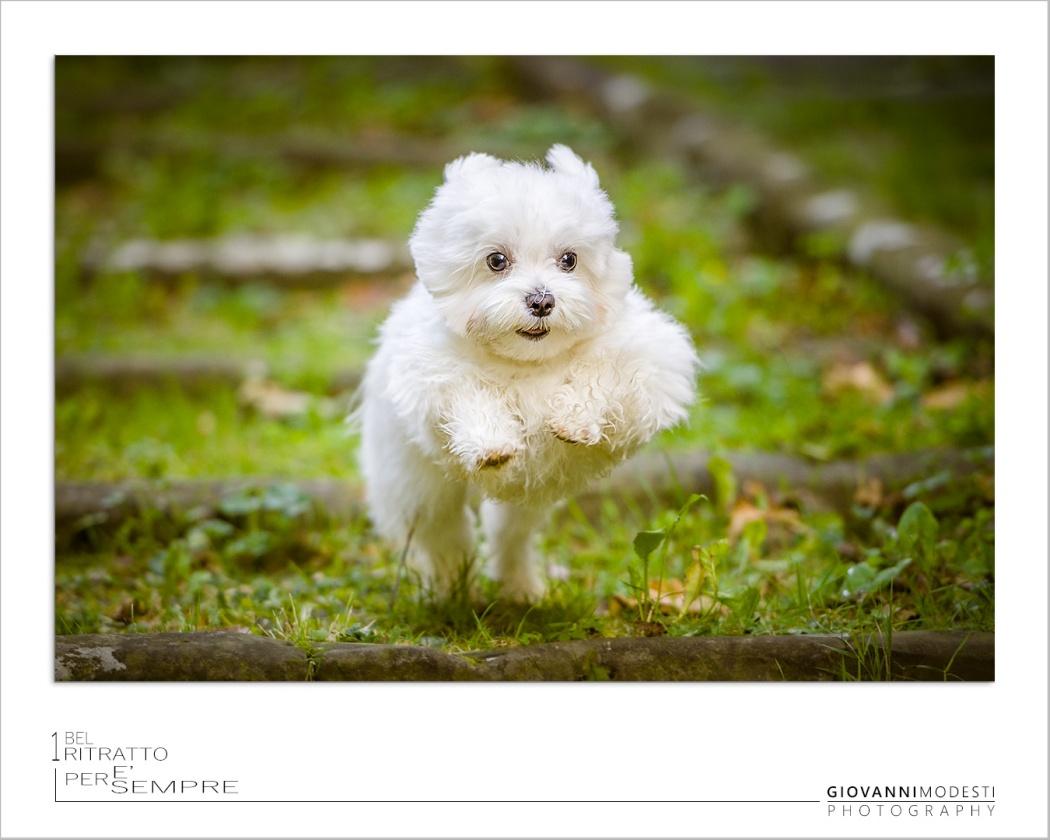 Fotografo Dog & Pet Bologna -  Vuoi foto meravigliose che mettano in risalto le qualità del tuo cane?   Prenota ora il tuo servizio di ritratto Dog & Pet con Whatsapp