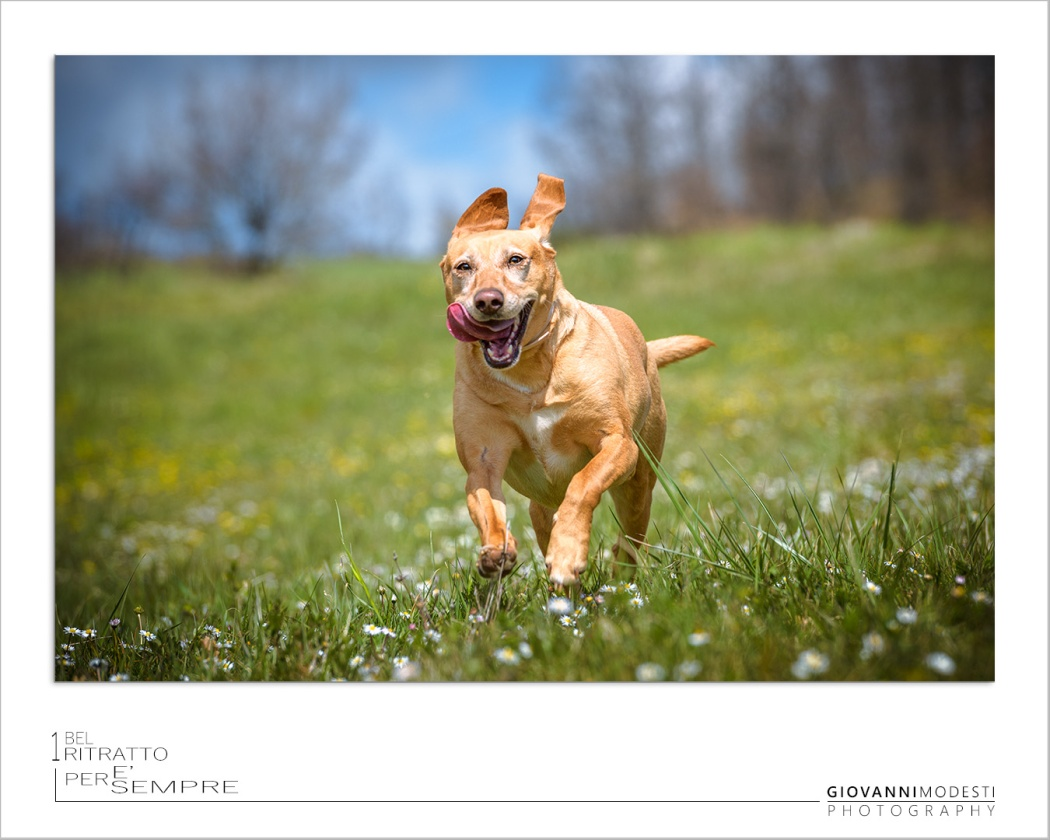 Fotografo Dog & Pet Bologna
